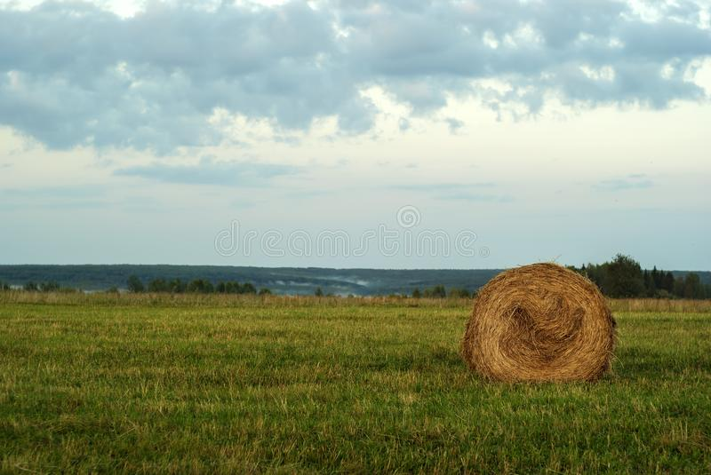 Round bale of hay on a beveled meadow. Large round bale of hay lays on a beveled meadow after rain stock photos