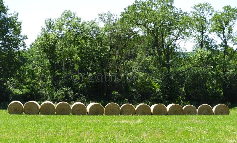 Round hay bale lineup ready for pick up and wrapping royalty free stock images