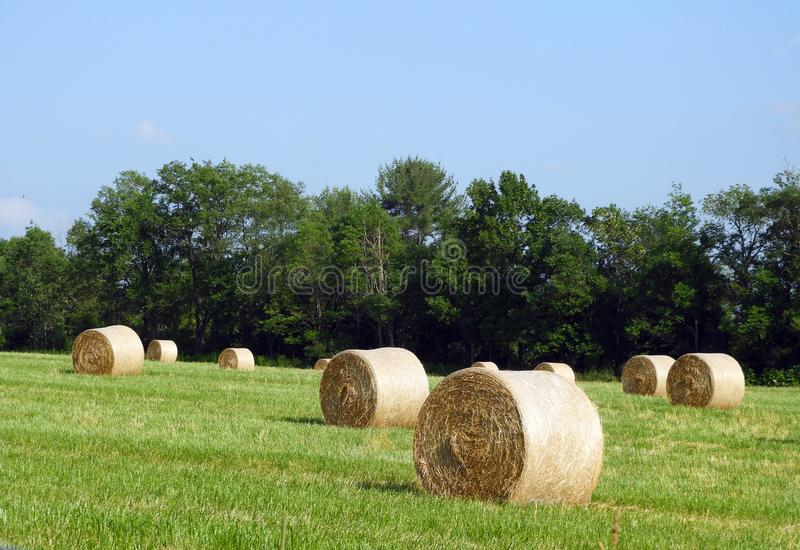 Hay bales scattered to dry in the hot summer sun stock photography