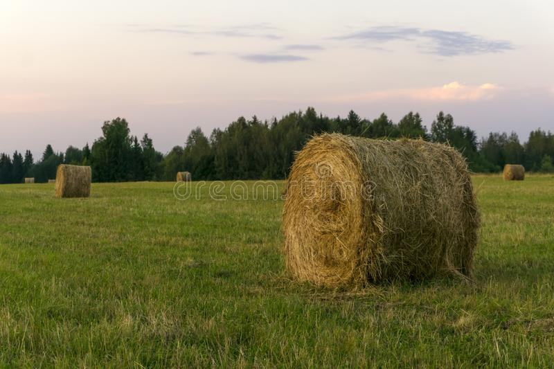 Round bales of hay on a beveled meadow. Large round bales of hay lays on a beveled meadow royalty free stock photo