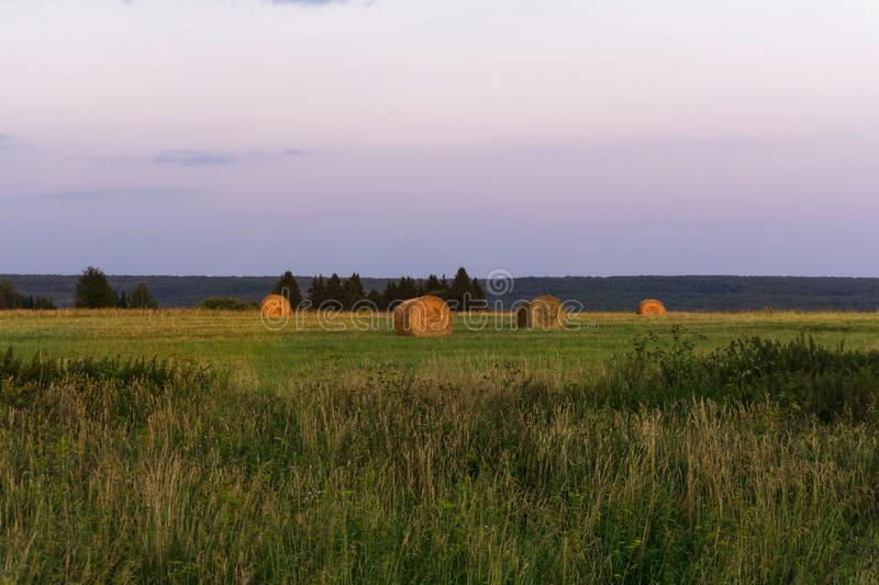 Round bales of hay on a beveled meadow. Large round bales of hay lays on a beveled meadow royalty free stock photography