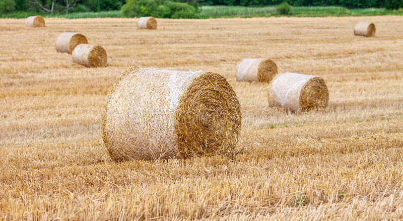 Download Round Bales Of Hay In The Field Stock Image - Image: 31920843