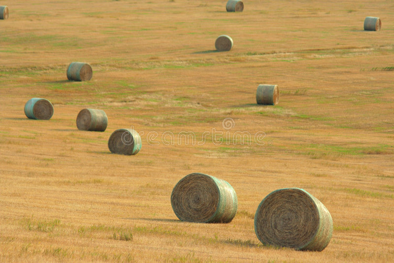 Round bales on hillside royalty free stock photos