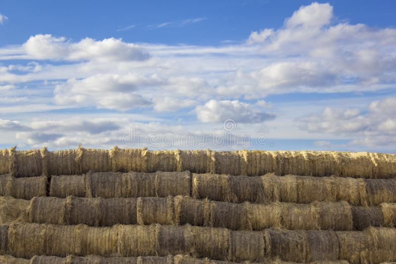 Round bales a stack of dry yellow hay closeup lie in straight rows against a blue sky and white clouds stock image