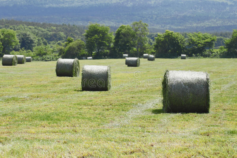 Download Round Bales Of Straw In The Meadow Stock Photo - Image of harvest, season: 25697524
