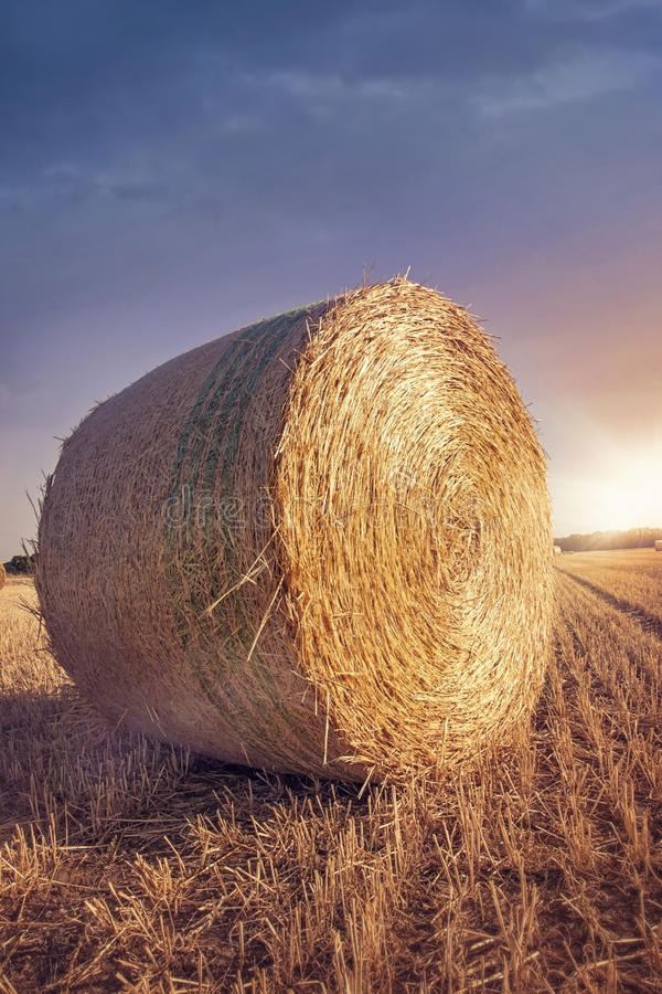 Download Round bales of straw stock image. Image of harvest, bale - 32725189