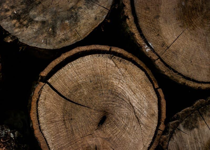 Round Brown Wooden Slab stock photos