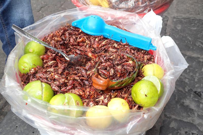 Bucket of exotic edible crickets with lime royalty free stock photo