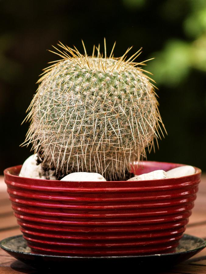 Round cactus with many thorns stock images