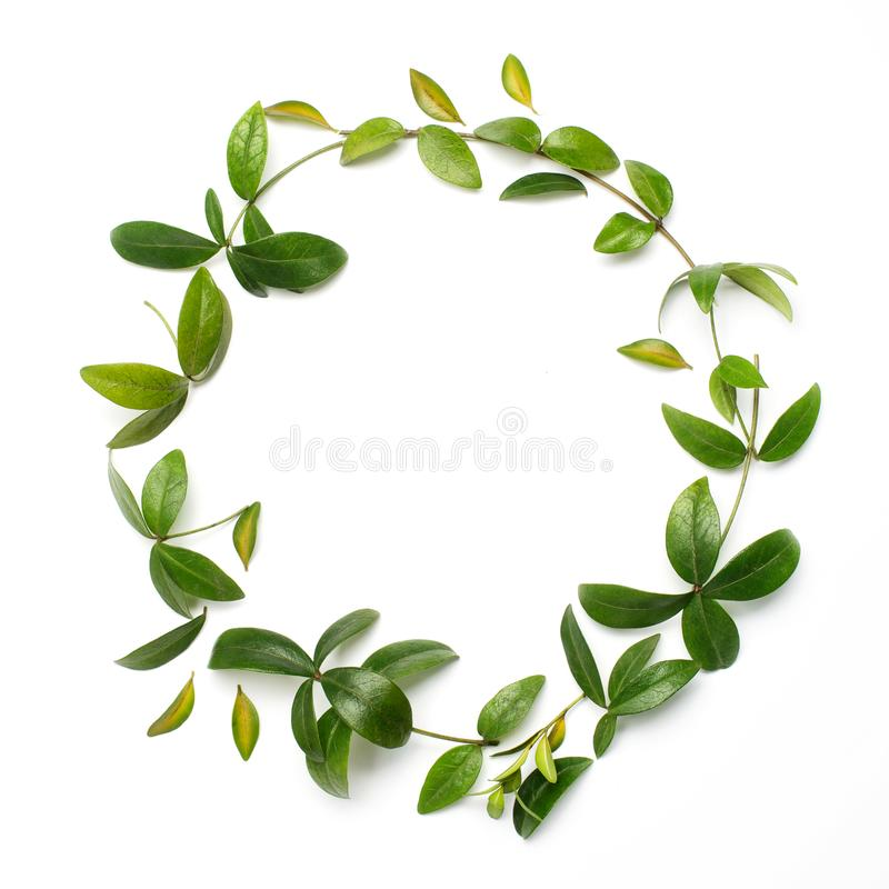Round circle frame made of green branches and leaves on white background. Flat lay, top view stock images