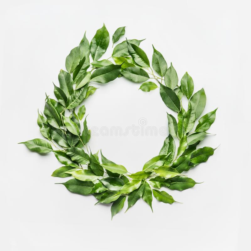Round circle frame made of green branches and leaves on white background. royalty free stock images