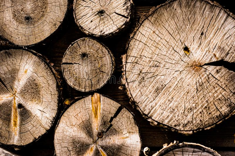 Round cut down trees with annual rings and cracks. Wooden texture royalty free stock photography