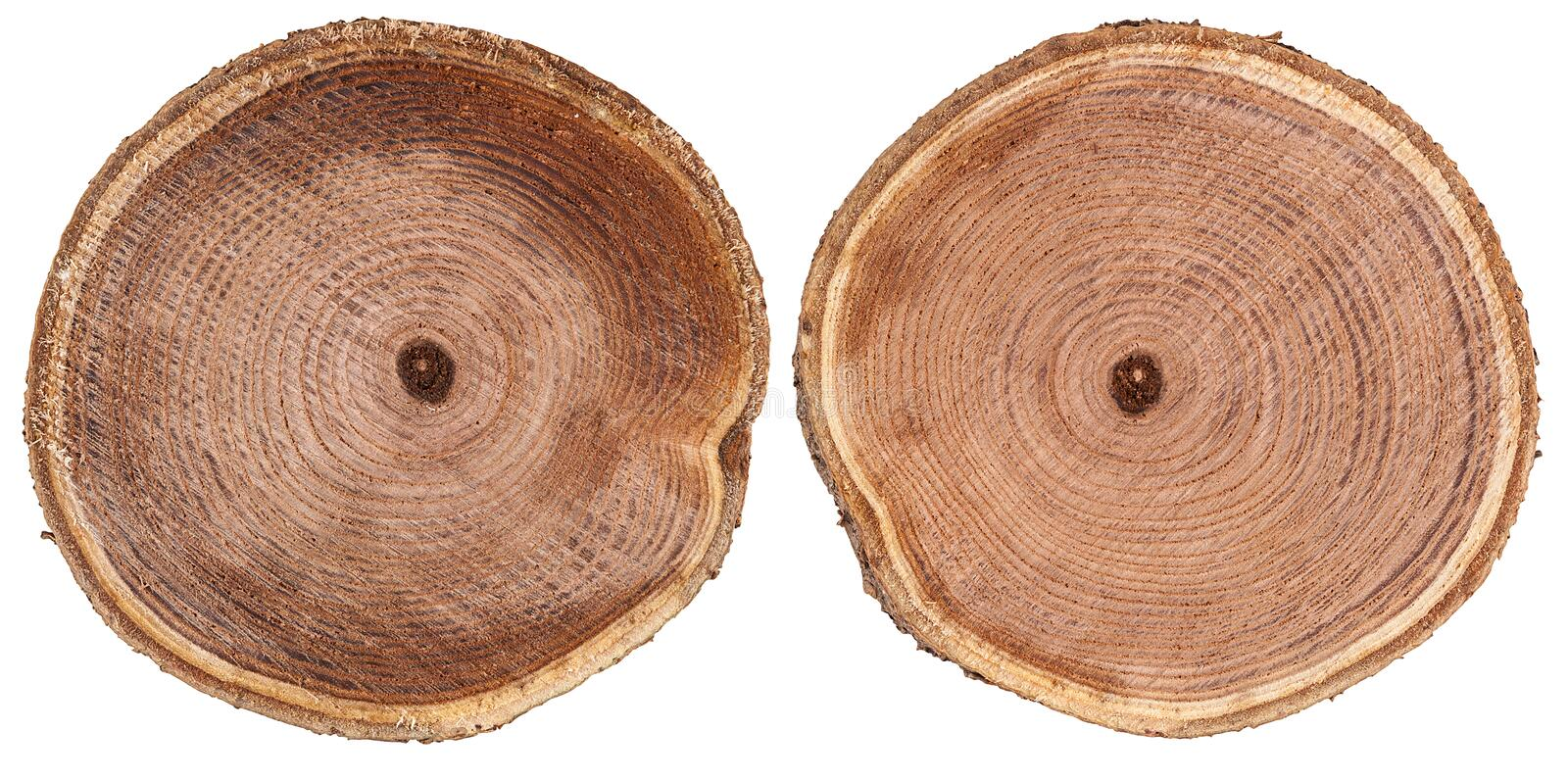 Round cut wood background royalty free stock photos