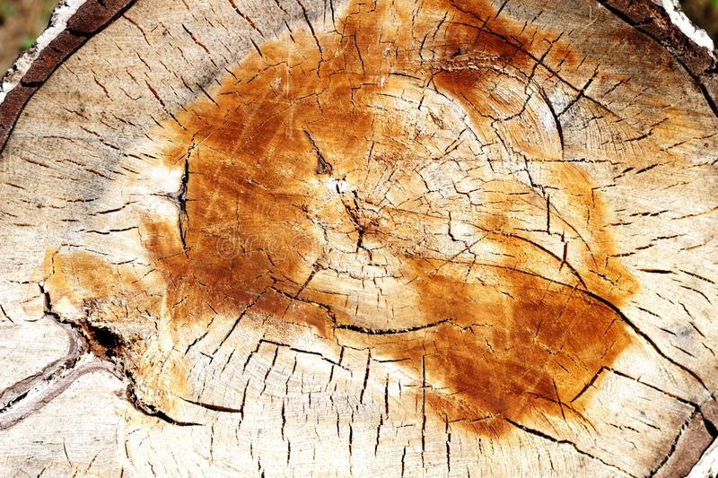 Round-cut wood texture stock photography