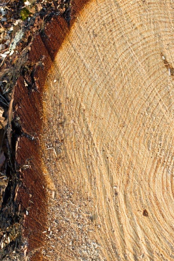 Round drewna roku pierścionki - hd obrazek fotografia stock
