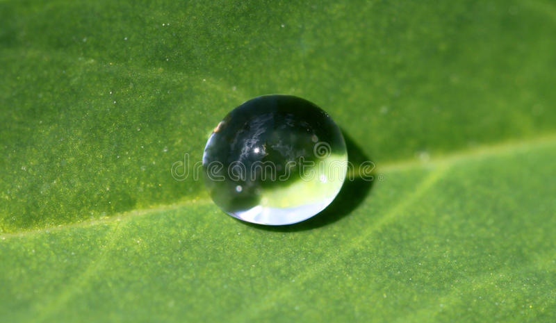 Download Round Drop On A Green Leaf Royalty Free Stock Image - Image: 32853166