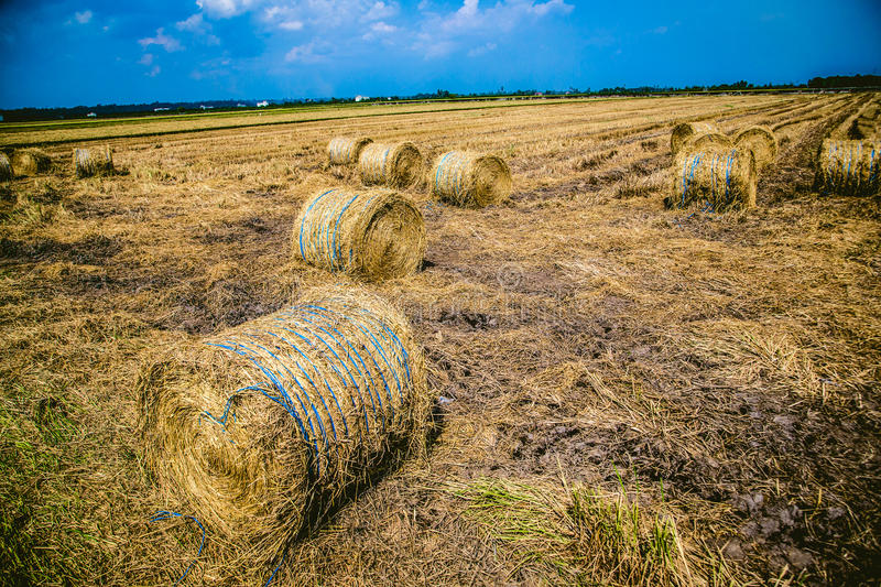 Round dry straw bales on the field Sekenchan royalty free stock photos
