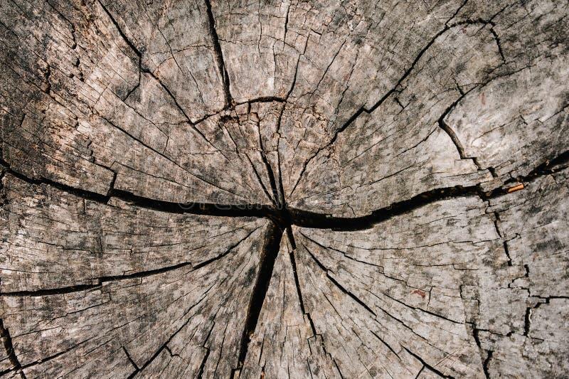 Round drzewnego structureTree pierścionku backgroundRound podstawowy texturesw obraz stock