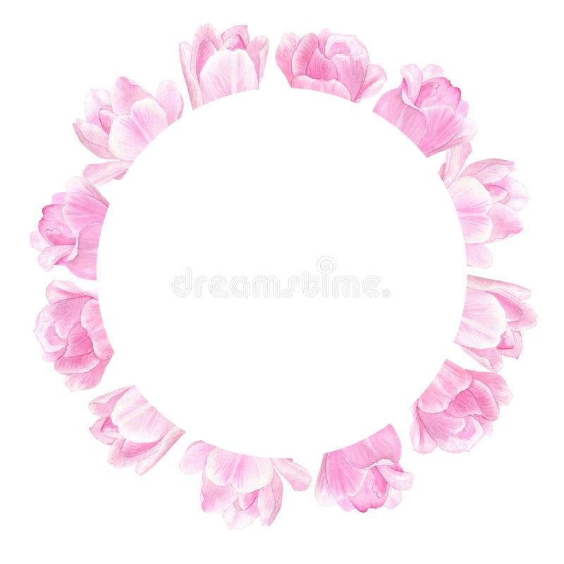 Round floral frame with pink tulips. For Valentine`s Day, Mother`s Day, Wedding, Birthday. Watercolor hand drawn illustration. vector illustration