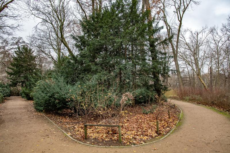 Round footpath in Tiergarten park of Berlin Germany. Bare trees and conifer trees are growing on lawn covered with leaves. Tranquil landscape with nobody in royalty free stock images