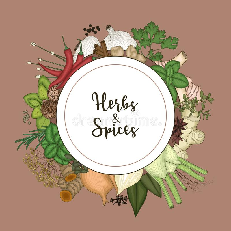 Round frame background with spices and herbs vector illustration