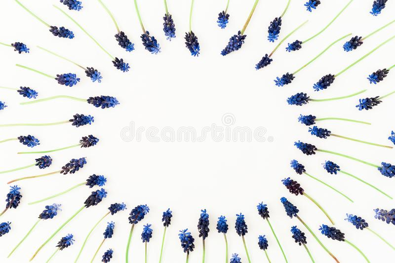 Round frame with blue muscari flowers on white background. Flat lay, top view. Spring time composition royalty free stock photo