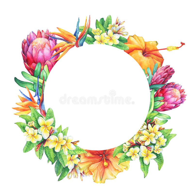 Round frame with branches purple protea, plumeria, strelitzia and hibiscus tropical flowers. stock illustration