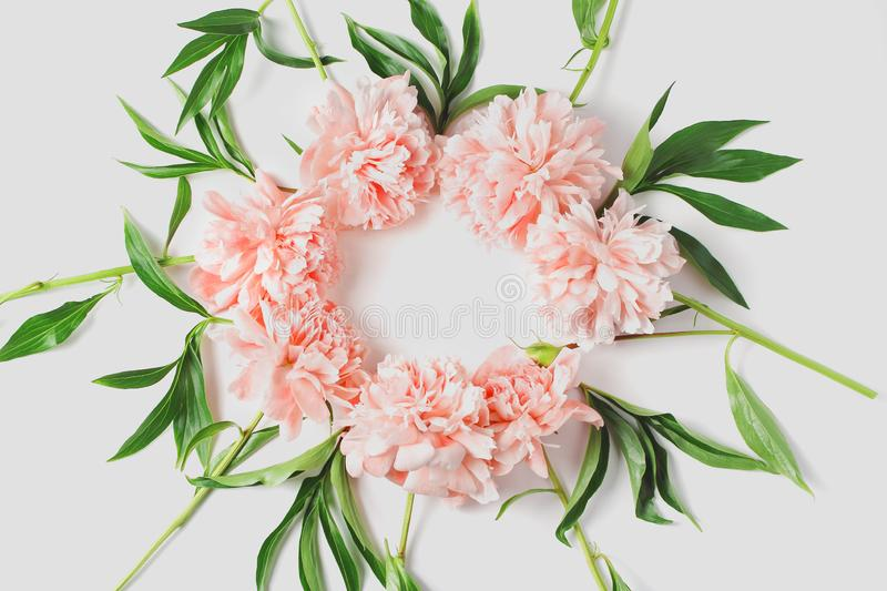 Round frame of flowers on a white background. light coral fresh peony flowers. flat lay, top view stock photography