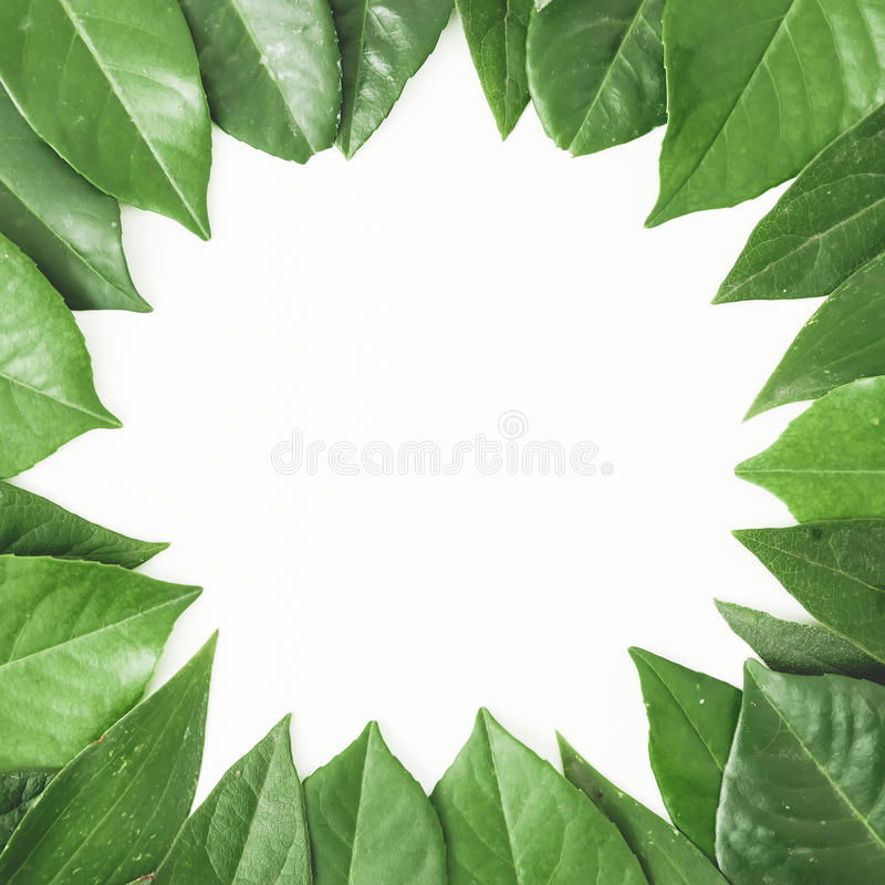 Round frame of green leaves. Creative layout of leaves on white background. Flat lay. Top view royalty free stock image