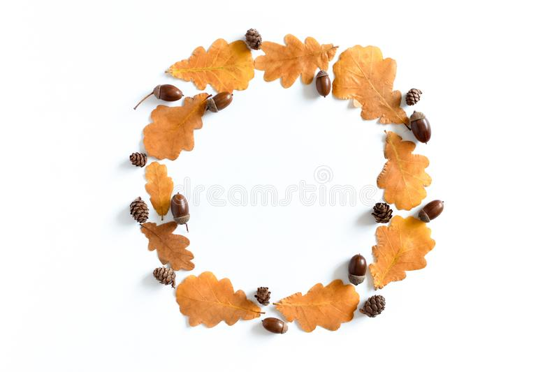 Round frame made from oak leaves, acorns and cones royalty free stock images