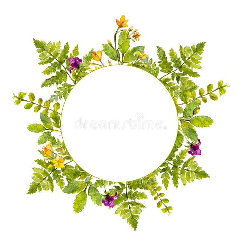 Round frame with painted watercolor green plants and wild flowers. Nature inspired border for natural cosmetics, spring. And summer events vector illustration