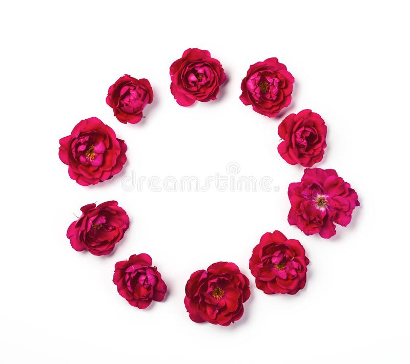 Round frame wreath made of pink rose flowers isolated on white background. Top view. royalty free stock photography