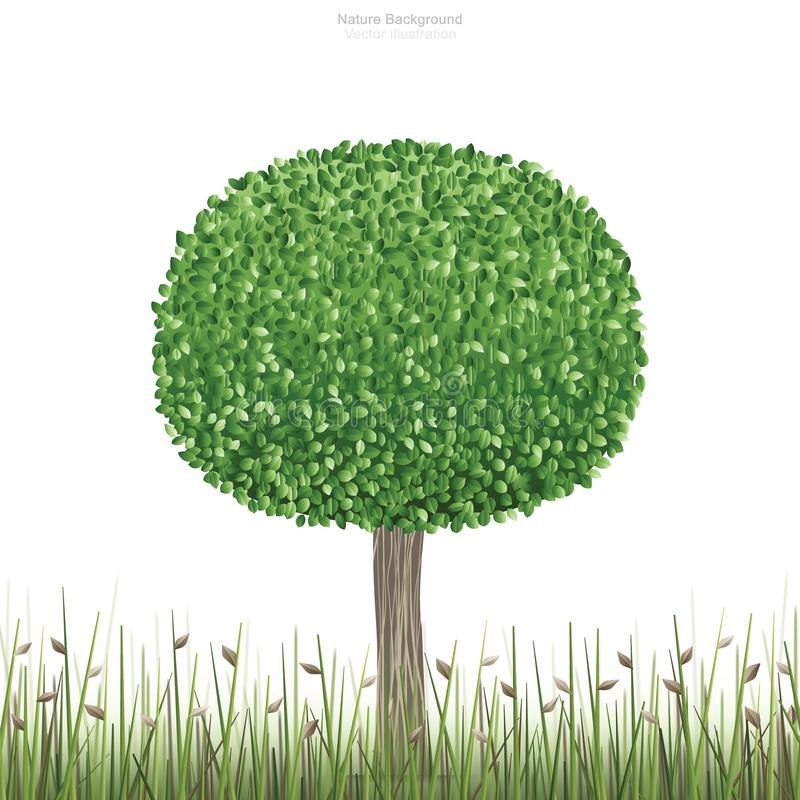 Round of green tree in natural green field area and white background. royalty free illustration