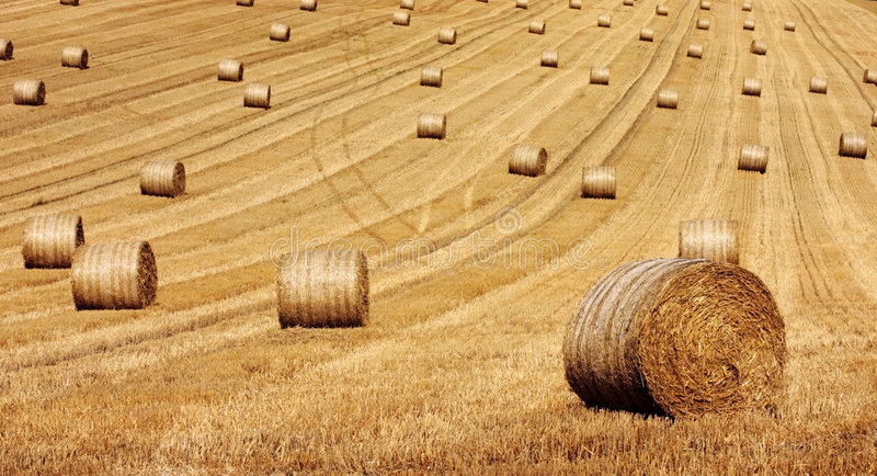 Download Round Hay Bails stock photo. Image of straw, yellow, corn - 220808