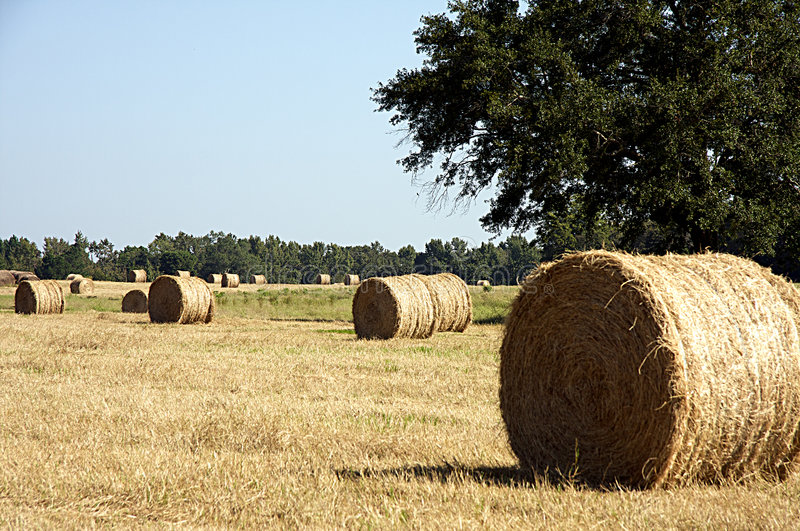 Download Round Hay Bale in Field stock image. Image of bale, rural - 6592389