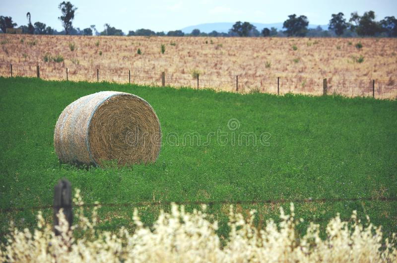 Round hay bale in a green field stock photo