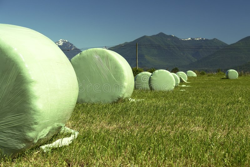 Round Hay Bales stock images