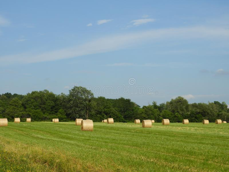 Round hay bales in a country field in the FingerLakes royalty free stock photo