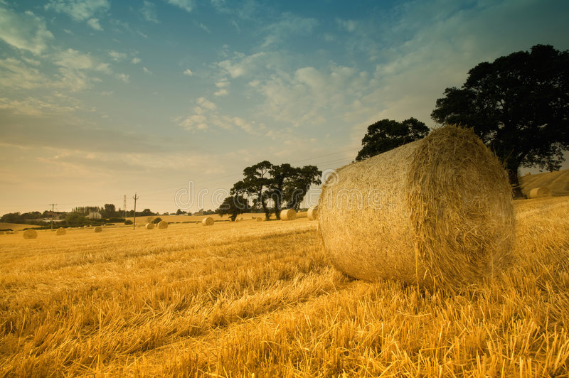 Round hay bales in field royalty free stock image