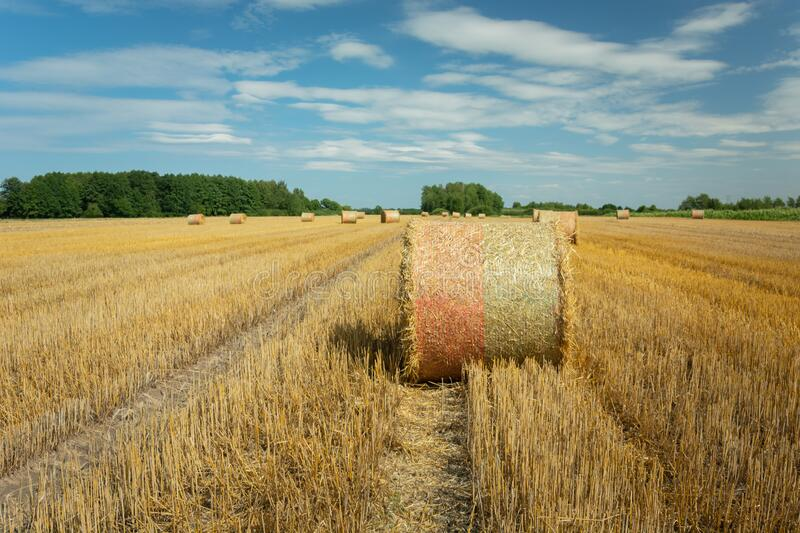 Round hay bales on the field, forest on the horizon and white clouds on the blue sky in Nowiny, Poland royalty free stock images