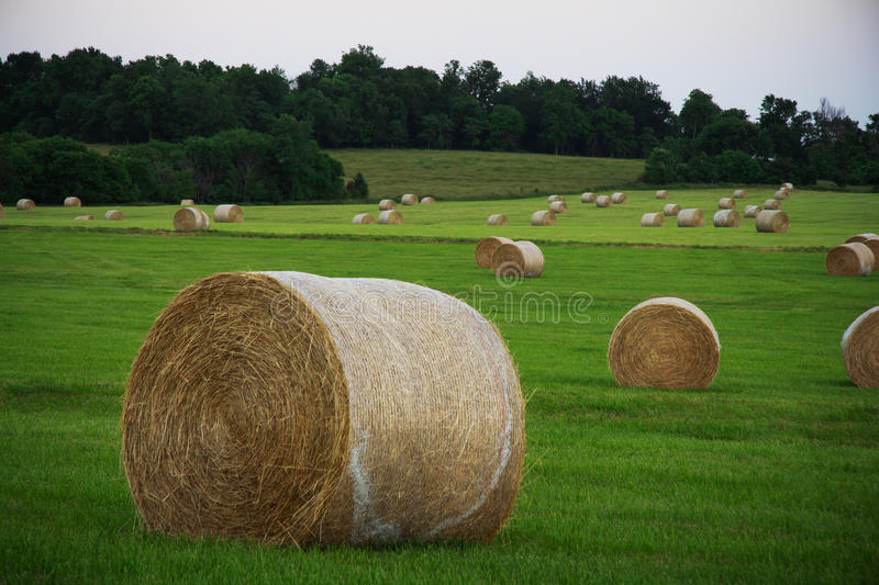 Download Round Hay Bales stock image. Image of haybales, grass - 32133027