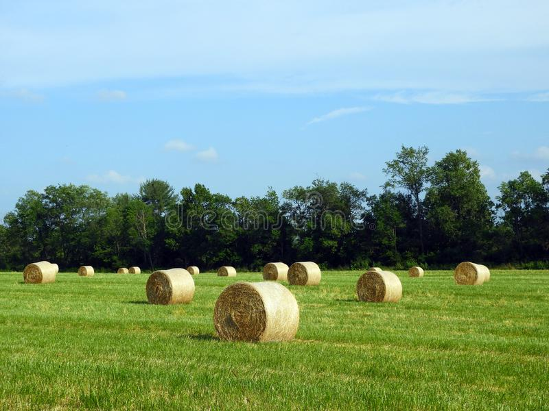 Round hay bales just off the baler in a country field stock photography