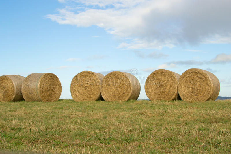Download Hay Bales stock photo. Image of country, outdoor, farming - 30364164