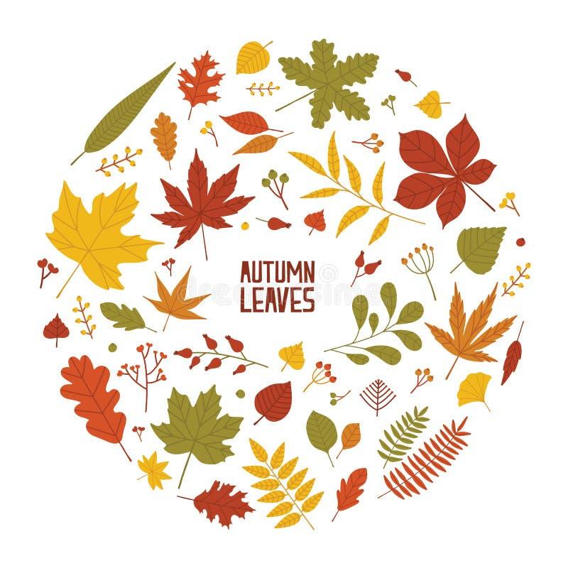 Round jesieni skład z wysuszonymi drzewo liśćmi, gałąź i jagodami odizolowywającymi na białym tle, projekt dekoracyjny royalty ilustracja