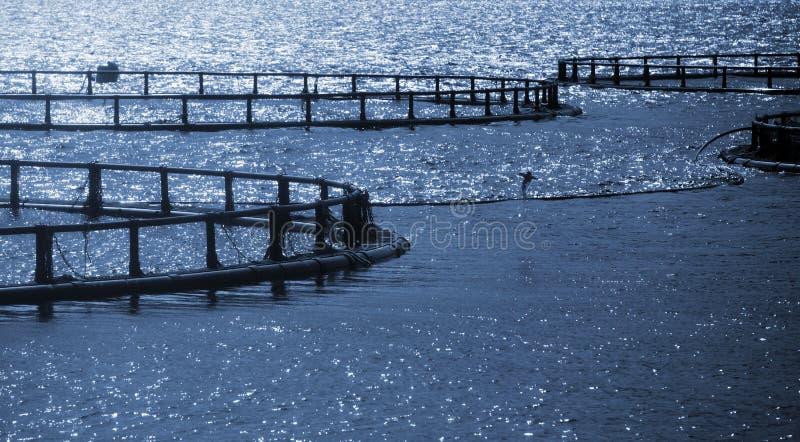 Round klatki Norweski rybi gospodarstwo rolne zdjęcia stock