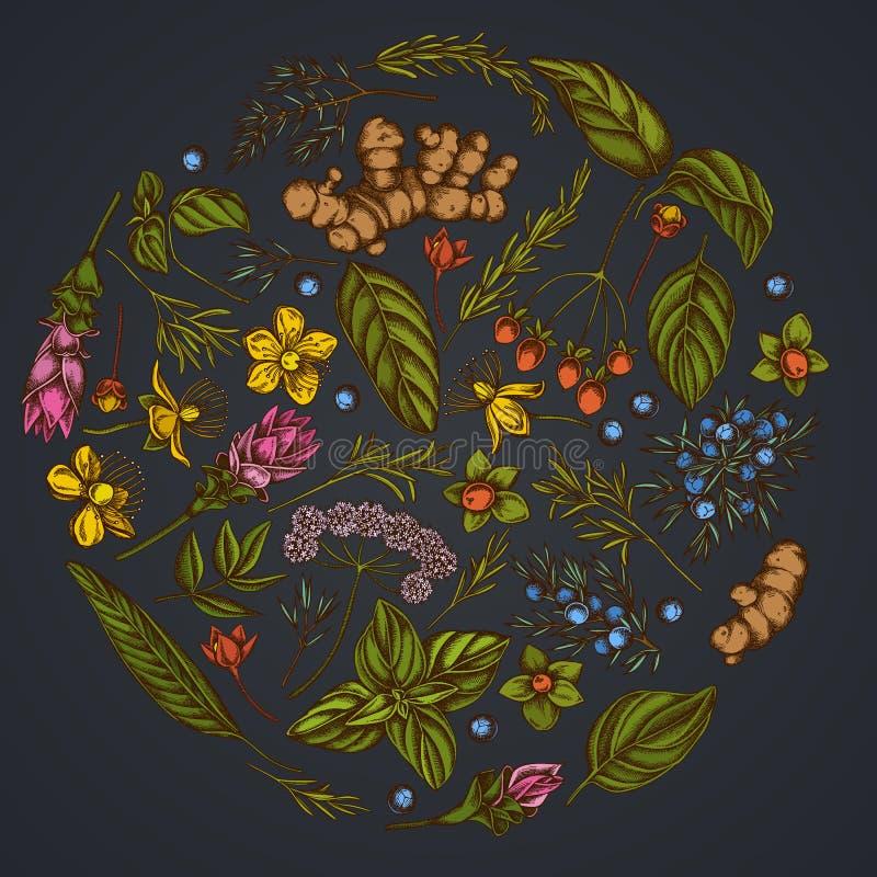 Round kwiecisty projekt na ciemnym tle z arcydzięglem, basil, jałowiec, hypericum, rozmaryn, turmeric ilustracja wektor