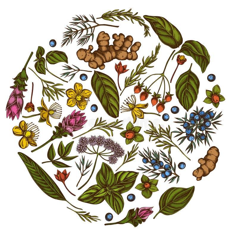 Round kwiecisty projekt z barwionym arcydzięglem, basil, jałowiec, hypericum, rozmaryn, turmeric ilustracji