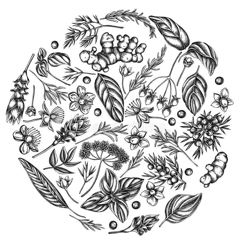 Round kwiecisty projekt z czarny i biały arcydzięglem, basil, jałowiec, hypericum, rozmaryn, turmeric ilustracji