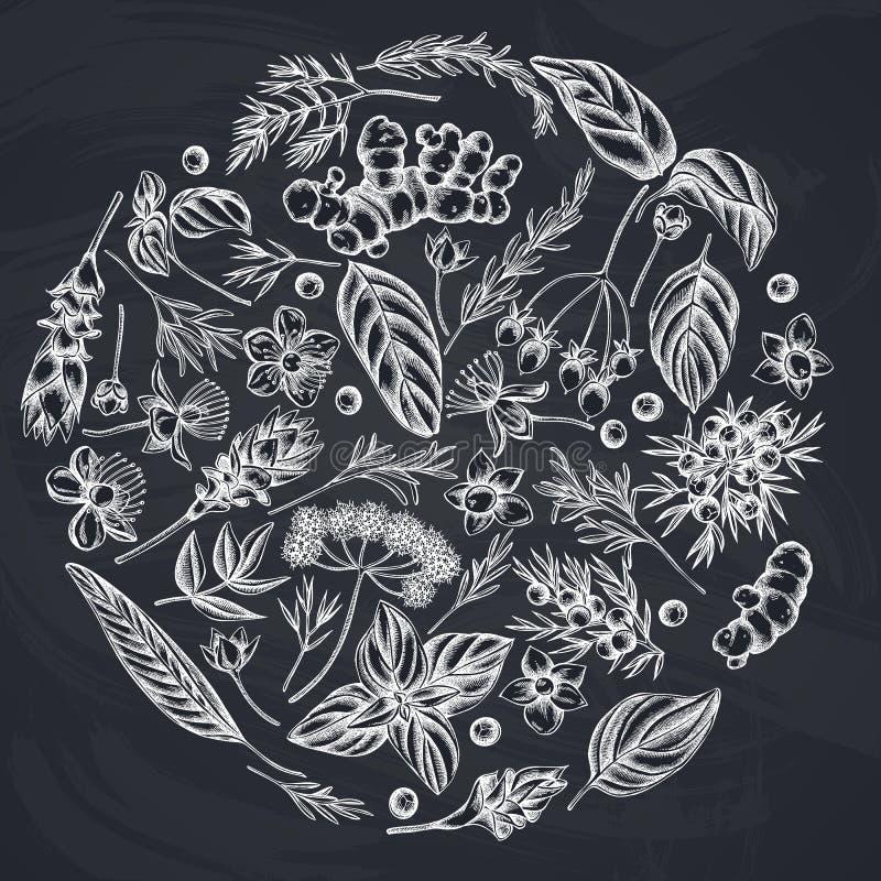 Round kwiecisty projekt z kredowym arcydzięglem, basil, jałowiec, hypericum, rozmaryn, turmeric ilustracji