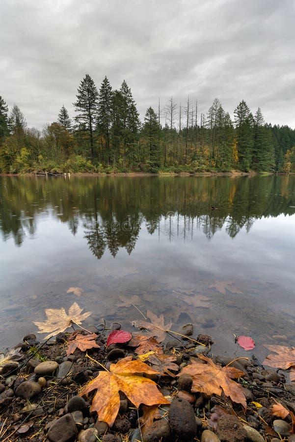 Round Lake at Lacamas Park in Fall. Round Lake at Lacamas Park in Washington State during fall season on a rainy day royalty free stock image